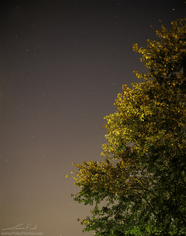 Stars and Tree Portrait low res.jpg