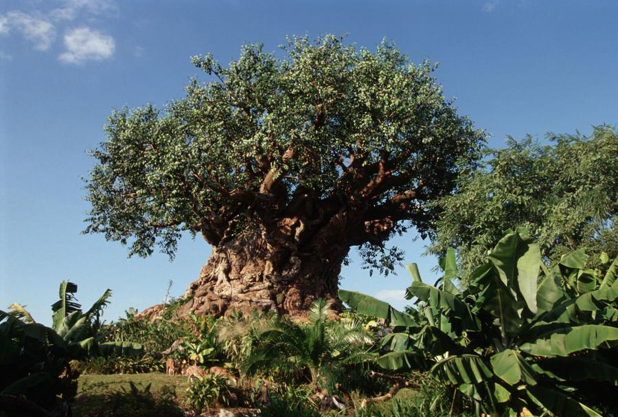 tree-of-life-6900.jpg
